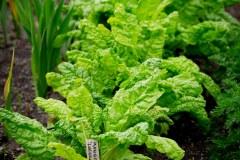 06 605 Salat